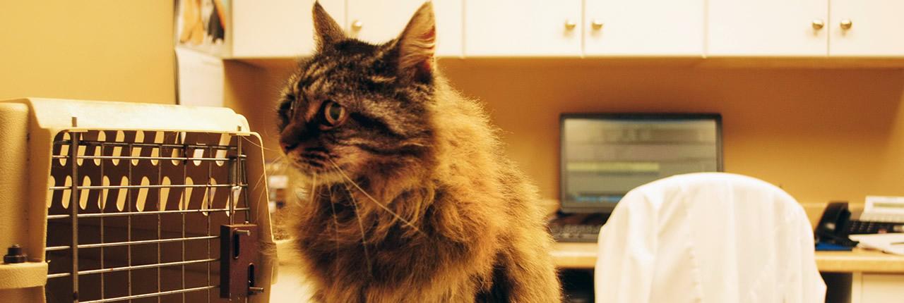 Zoonosis: Enfermedades transmitidas de forma natural desde un animal hacia un humano